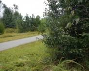 Reedy Creek Greenway