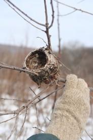 birds nest for docs