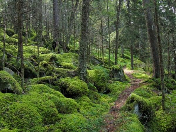 Baxter-Creek-Trail