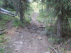 Absarka beartooth wilderness