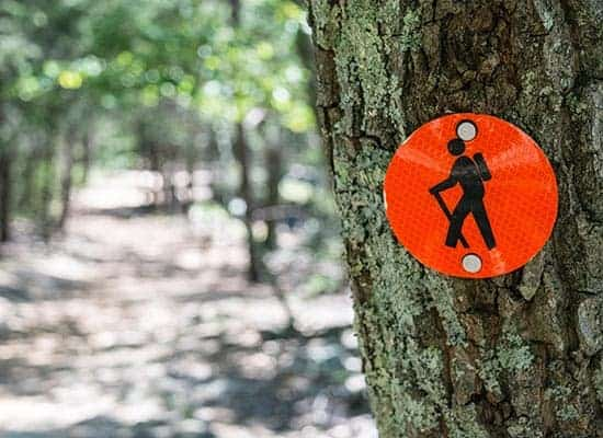 orange trail marker with a hiking icon nailed to tree along a trail